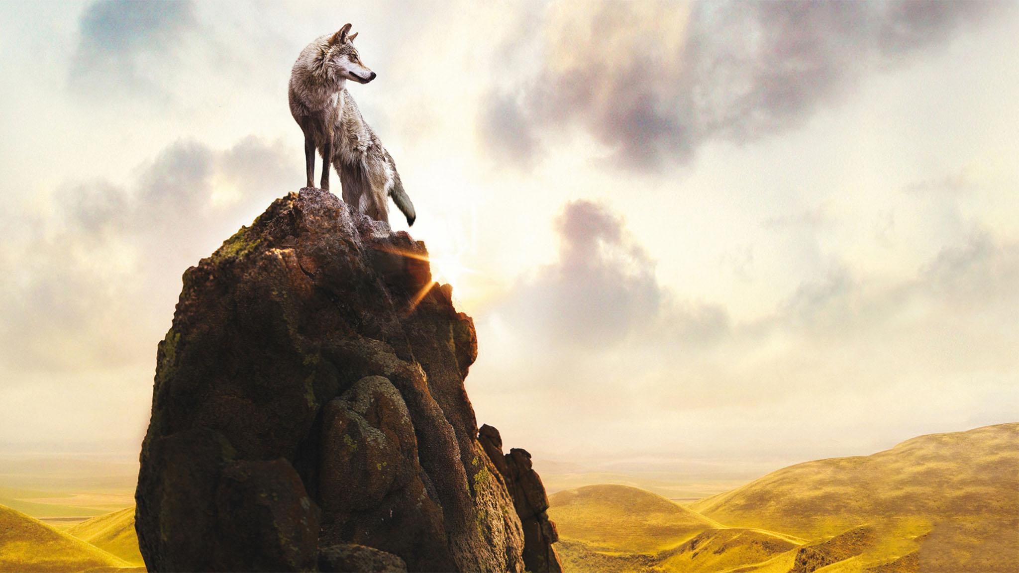 فيلم Wolf Totem 2015 مترجم